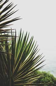 Resultado de imagem para palmeiras fundo tumblr