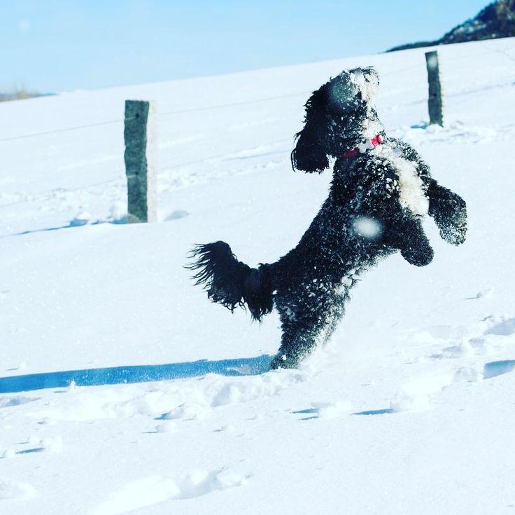 Si queréis enviarnos fotografías de vuestros peludos lo podéis hacer por nuestro Facebook. Aprovechamos para recordar que sigue en marcha nuestra campaña de limpieza dental y esterilización de #perros y #gatos 218 en #Barcelona. Solicitudes de información y reservas desde nuestra web  LaSalut.es  #lasalut #veterinari #veterinario #perro #gato #gats #gossos #gos #gat #dogs #veterinarian #ilovedogs #perrosdeinstagram #perrosgram #gatosdeinstagram #mascotas #viladegracia #gràcia #veterinaria…