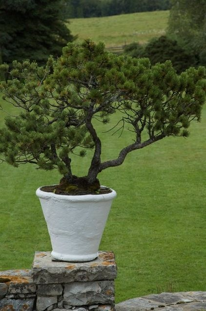 Interesting potted plantings go minimalist with one for Low maintenance outdoor potted plants