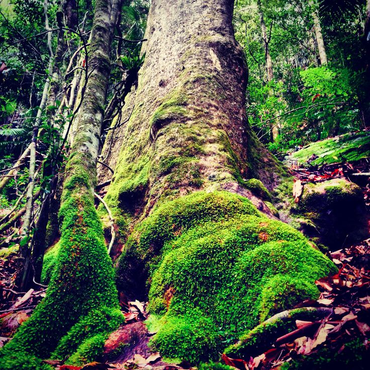 SPRINGBROOK National Park There's magic in the forest... #scenicdaytours #springbrook