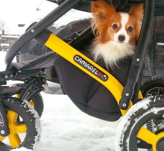 Коляска Camarelo - надежный помощник для зимних прогулок #camarelo, #stroller, #детскаяколяска, #camareloorgua