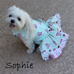 Can you see your little fur kids modeling this little green ballet roses harness dog dress?  Sophie sure enjoys it.  Click the link to get yours! http://www.littledogfashion.com/Mint-Ballet-Rose-Dresses-for-Dogs-p/mint-balet-rose-dres.htm