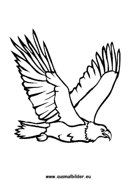 Malvorlagen Tiere Adler Zum Drucken Ausmalbilder Einhorn Carving