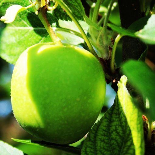 Oltre 25 fantastiche idee su alberi da frutto su pinterest for Alberi frutta vendita