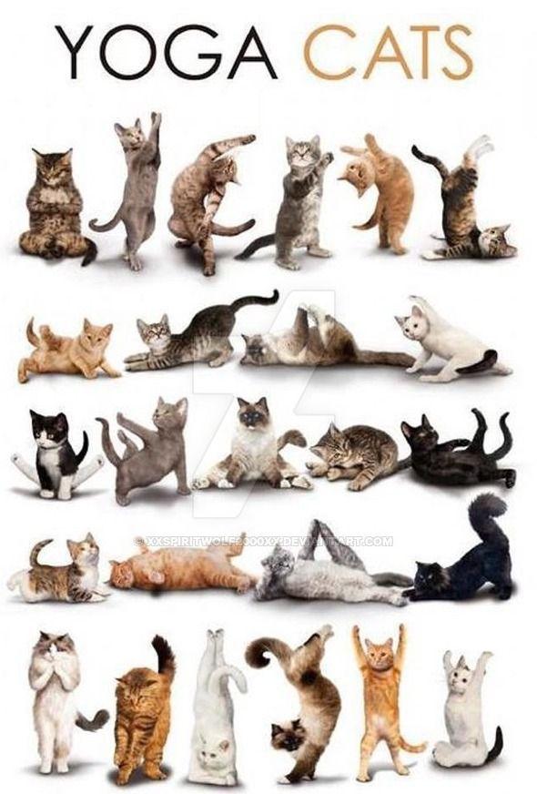 Yoga Cats Cat Yoga Cat Posters Animal Yoga