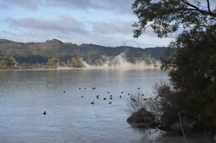 Birds on Lake Rotorua with steam in the background