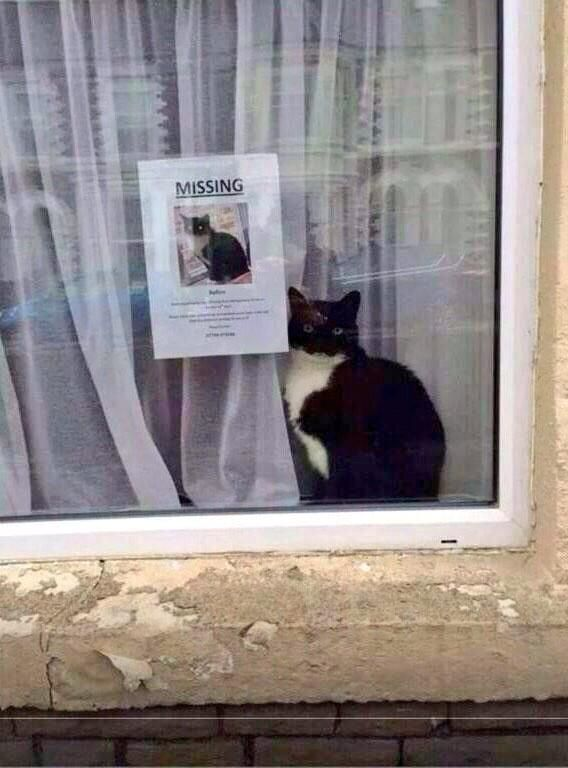 Missing cat poster.