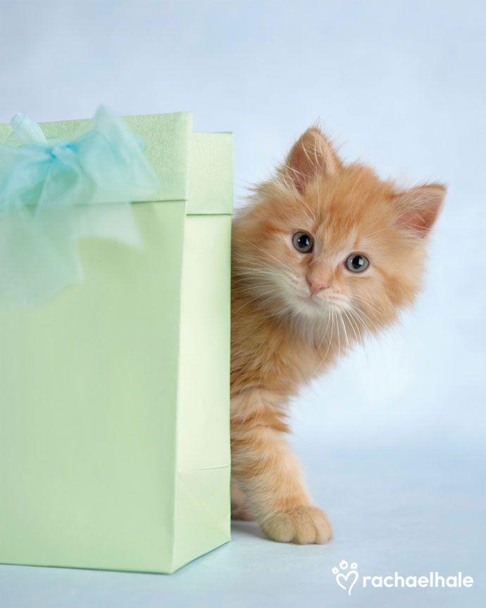Прикольные, поздравительную открытку с котиком