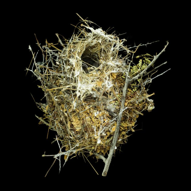 Think of a bird's nest and you might picture a simple, neat cup of sticks and grass nestled on a tree branch.