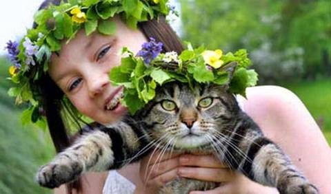 Midsommar-wow the cat looks thrilled..lol