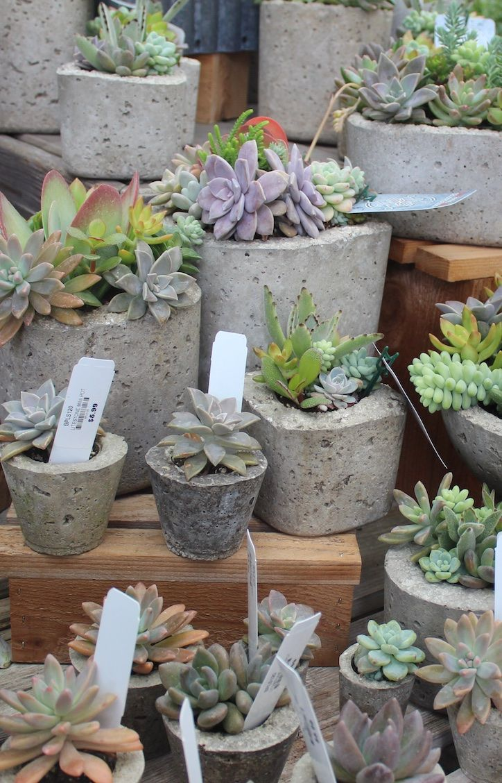 775 best Succulent Ideas from The Barn Nursery, Chattanooga! images on  Pinterest | Nurseries, The o'jays and Decoration