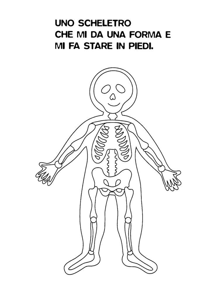 Oltre 25 fantastiche idee su scheletro umano su pinterest - Scheletro foglio da colorare ...