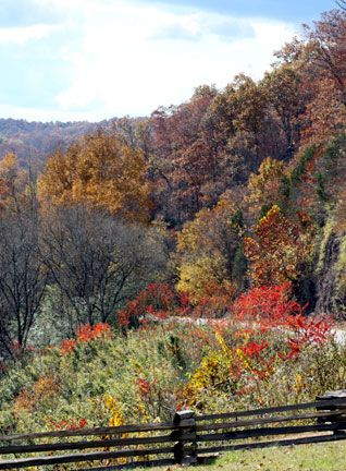 Trace Fall Foliage - Photo Taken: November 2, 2013 by Christie Theriot