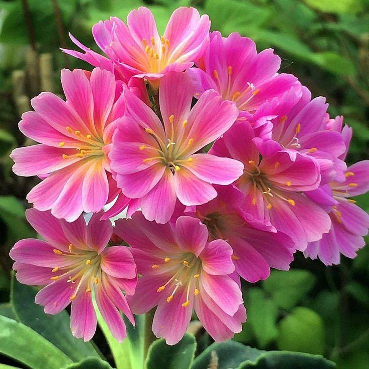 Güzel çiçekler.