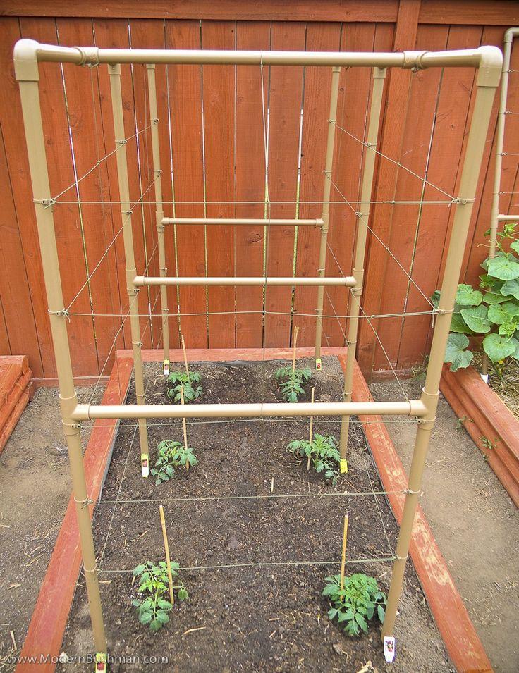 Pvc Tomato Trellis Closeup Vegetable Garden Raised Beds