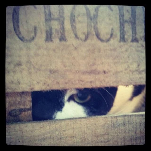 Moody kitty...