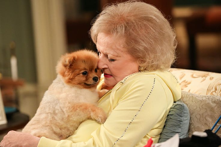 Hot In Cleveland Dog George Clooney Breed