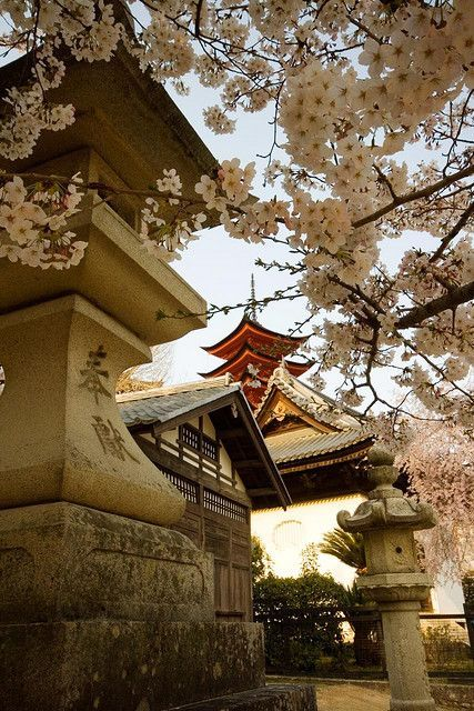 """Pagoda through the sakura (cherry blossoms). Previous pinner wrote: """"I absolutely loved Miyajima.. One of the most beautiful places I've been, especially with the sakura in full bloom."""""""