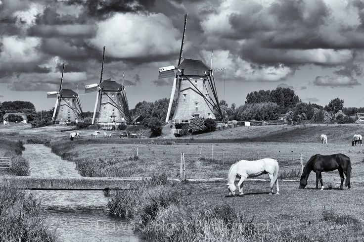 Drie Molen by Leidschendam with horses