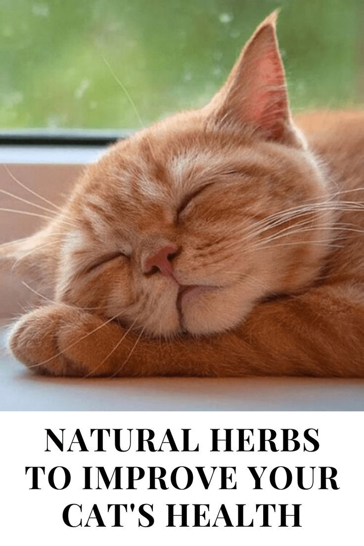5 Herbs To Improve Your Cat S Health In 2020 Cat Sleeping Positions Pets Cats Cat Sleeping