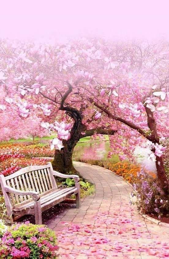 Background Taman Bunga Pink Idekunik Com Taman Bunga Beautiful Nature Spring Spring Landscape Beautiful Nature