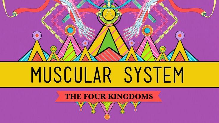 Big Guns: The Muscular System - Biology #31