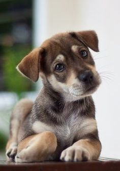 What a cute face on this puppy