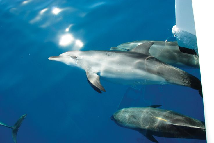 A beautiful day with the dolphins with Blue Dolphin Marine Tours
