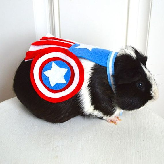 Superhero costumes for small rodents: Yes, please, except everything I try to put my piggies in doesn't fit! My piggies are obese!   ITS CAPTAIN AMERICA
