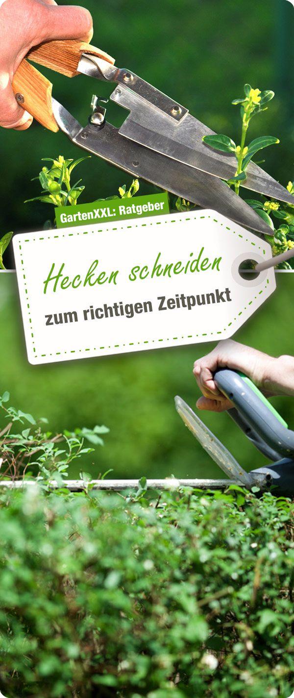Hecken Schneiden Zum Richtigen Zeitpunkt Garten Ratgeber