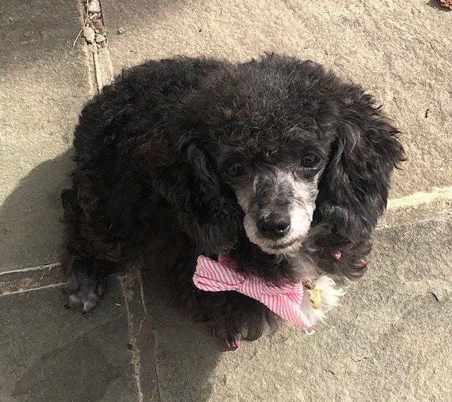 Adopt Elizabeth Taylor On Adoption Dogs Elizabeth Taylor