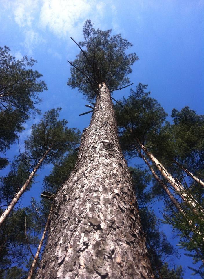 Razem z drzewami patrzeć w niebo…