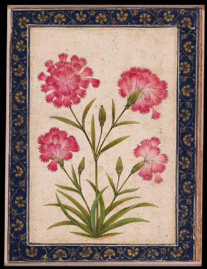 Style: Mughal; Type: Elephants, birds, and flowers; Title: 'Botanical study of a carnation', north India, c. 1630