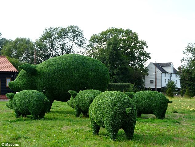 family of giant topiary pigs by Topiary Art Designs