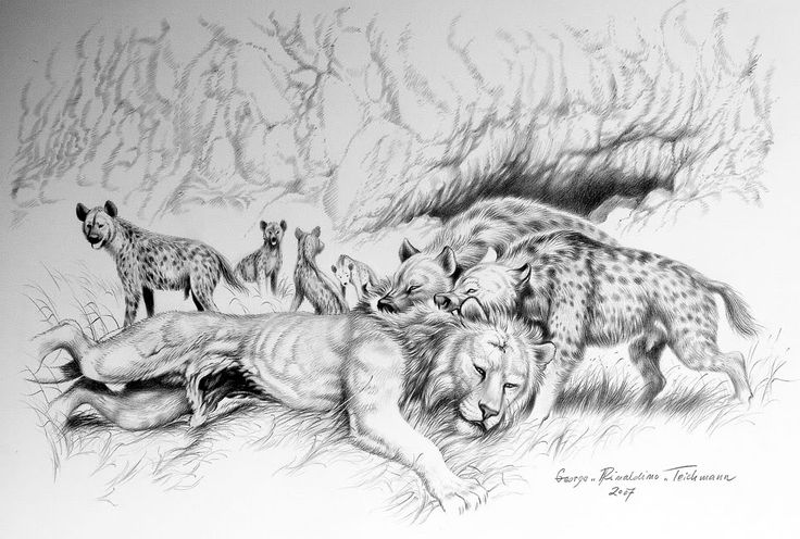 A clan of Cave Hyenas (Crocuta crocuta spelaea) has killed and are about to eat a lone male Cave Lion (Panthera spelaea) in the territory of modern Prague during the Pleistocene around 50,000 years ago by George 'Rinaldo' Teichmann