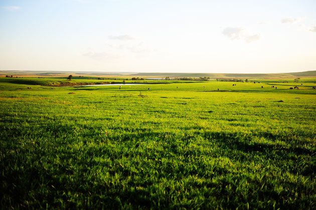 Post and photos by Marlboro Man. Our ranch is located on the southern edge of the Flint Hills, a large strip of tallgrass prairie that begins in northern Oklahoma and runs north across Kansas. Its …