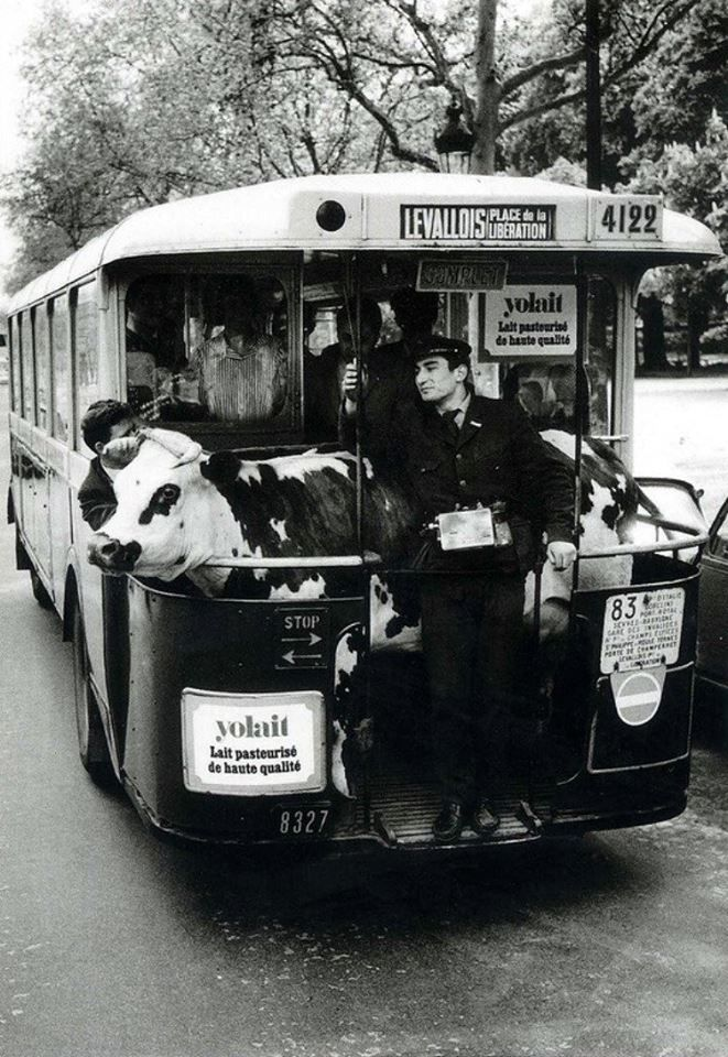 parisien vache - Robert Doisneau 1962