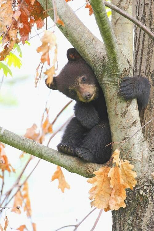 Little bear hiding in tree