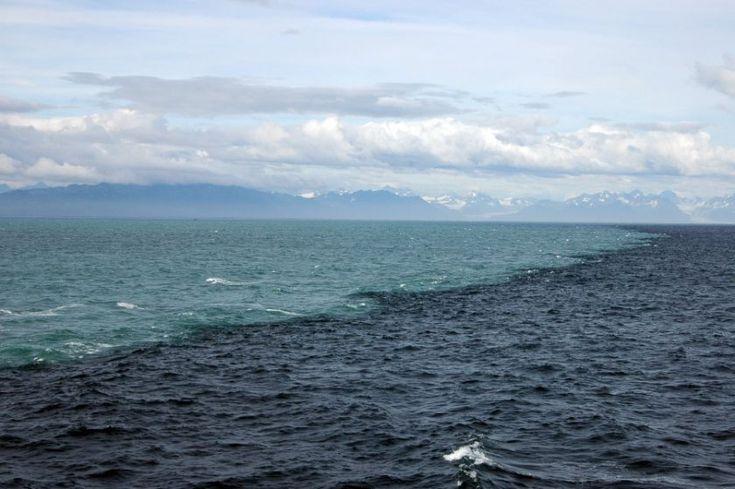 Denizler Birbirine Karışmıyor Mu? – Evrim Ağacı