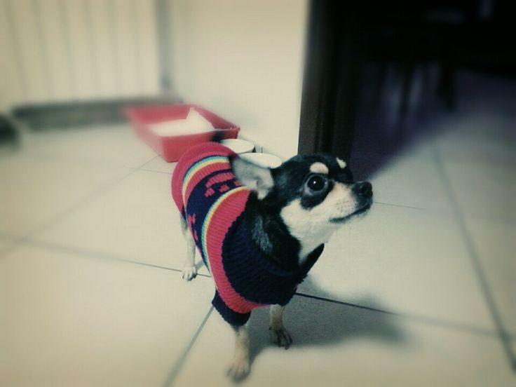 Una cucciola....♥