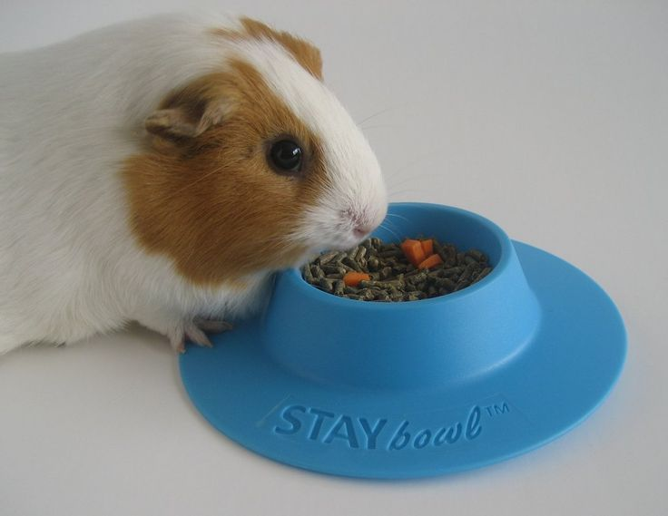 StaybowlⓇ Tip Proof Bowl For Guinea Pigs And Small Pets 1