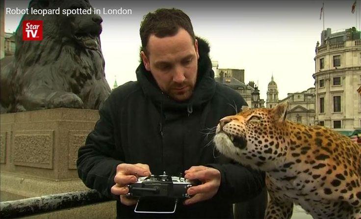 """Un leopardo robot suelto por las calles de Londres   Crean un leopardo robot advertir sobre las graves amenazas que aquejan a la especie. El invento posee más de 40 """"articulaciones"""" que se mueven simultánea y armoniosamente imitando los movimientos del gran gato en peligro de extinción.El animatronic fue presentado durante una campaña de National Geographic en Londres, donde transeúntes se encontraron cara a cara con """"Lily"""", nombre dado al felino robot."""