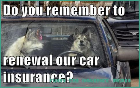 8 Doubts You Should Clarify About Funny Car Insurance Memes  funny car insurance memes  Car