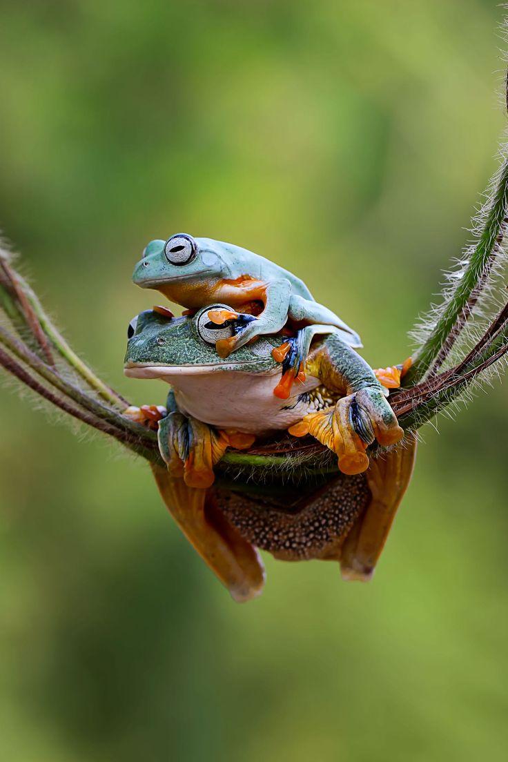 best 25 small lizards ideas on pinterest lizards geckos and