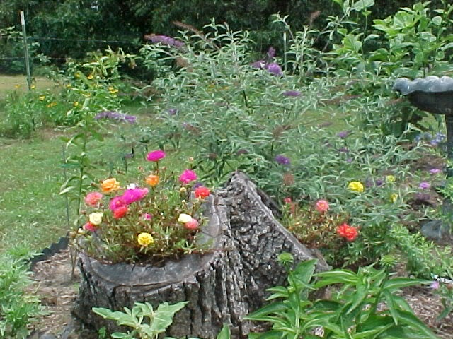 Flowers in a tree trunk garden art all things gardening pinterest trees a tree and tree - Flowers that grow on tree trunks ...