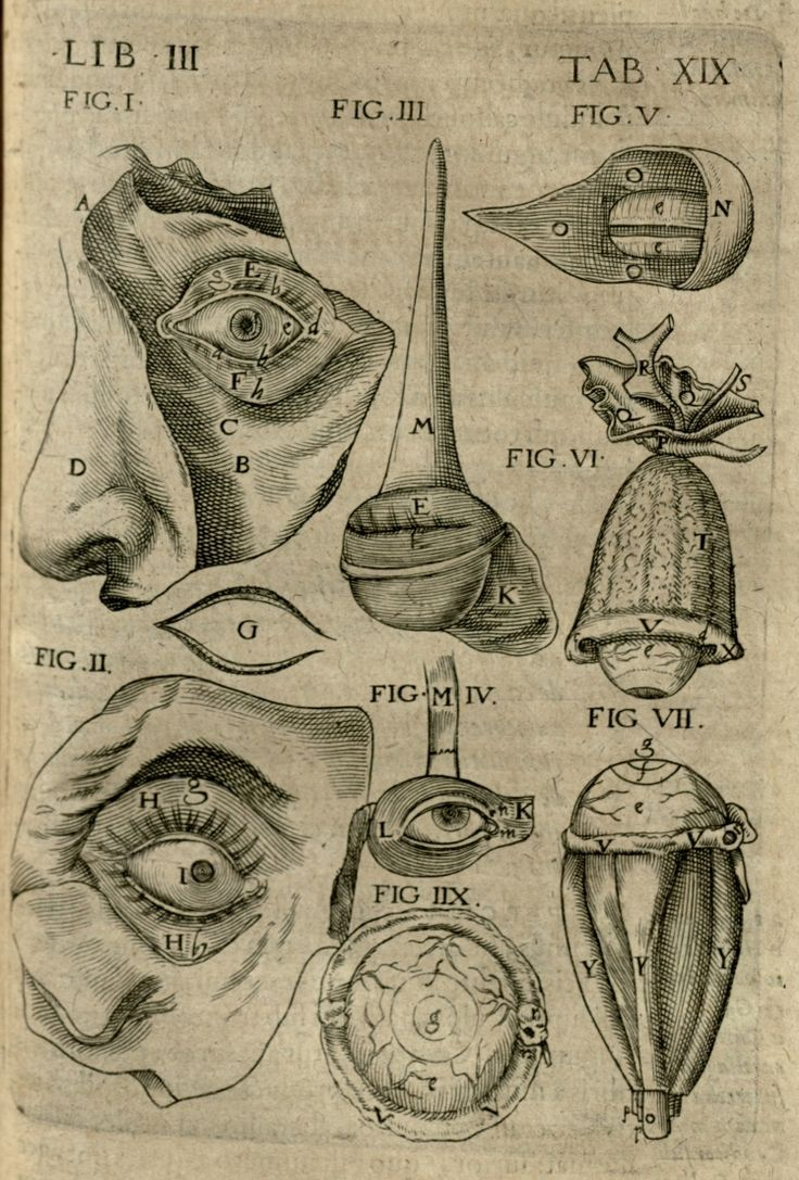 Anatomical Diagram Of The Eye With The Bones  Eyelids  And