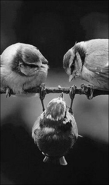 A question that sometimes drives me hazy am i or are the others crazy black white photographybeautiful birdsbeautiful