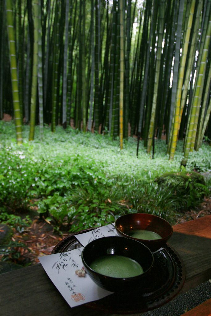 Tea at the Bamboo temple - Kamakura, Japan by DhkZ