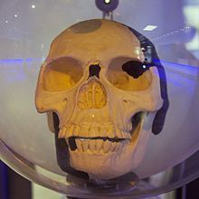 Authorities at the British Natural History Museum announce that the skull of the Piltdown Man, one of the most famous fossil skulls in the world, is a hoax.
