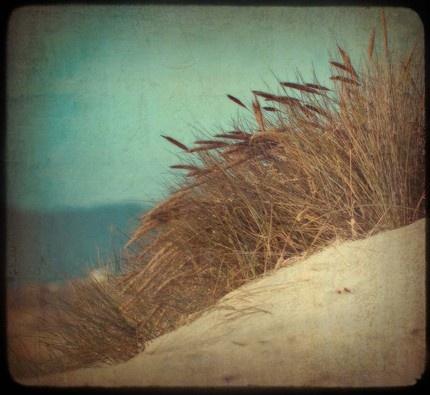 oceanColors Pallettes, Colors Pallets, Beautiful Photos, Bathroom Colors, Art Prints, Beach Grass, Beach Pictures, Things Aqua, Dunes Beach